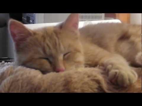 Pet Video