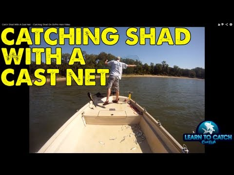 Catching Shad On The GoPro HD Camera