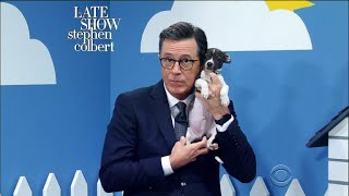 The Late Show 'Rescue Dog Rescue' With Ellie Kemper