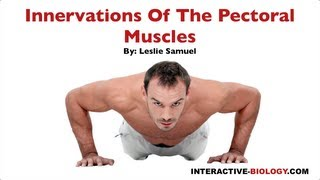 095 Innervations Of The Pectoral Muscles