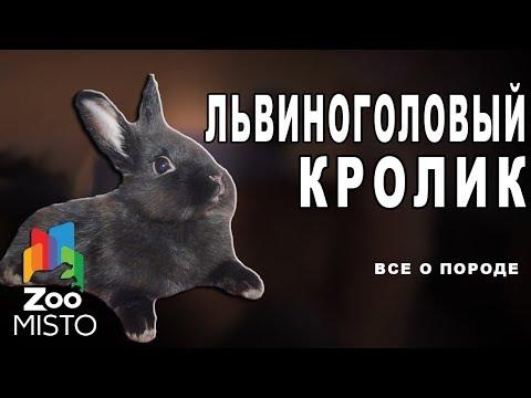 Львиноголовый кролик - Все о виде грызуна