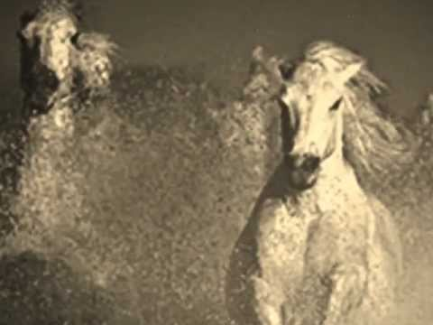 "rolling stones – ""wild horses"""