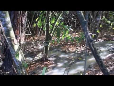 Esgoto continua sendo despejado sobre reserva ambiental em Itapeva.