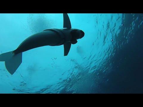 Meeres-Roboter: Mit den Augen eines Fisches