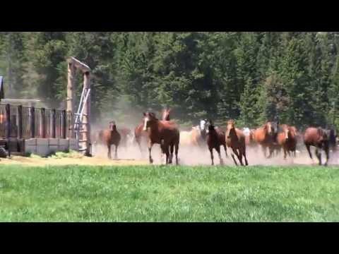 Paradise Ranch - Buffalo, Wyoming