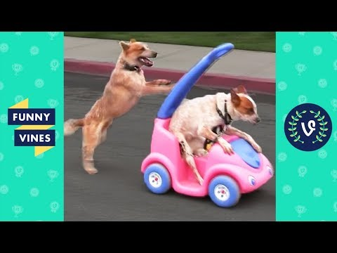 TRY NOT TO LAUGH - Cute FUNNY ANIMALS  Funny Videos March 2019