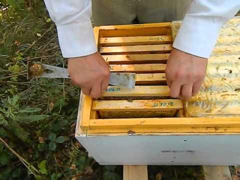 Пчеловодство. Смотреть онлайн: Осмотр нуклеусов у Измайлова.