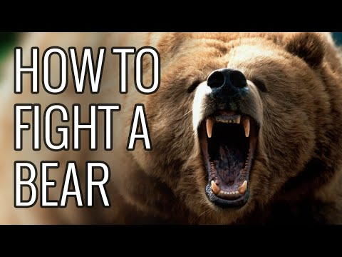 Video How To Fight A Bear - EPIC HOW TO download in MP3, 3GP, MP4, WEBM, AVI, FLV January 2017