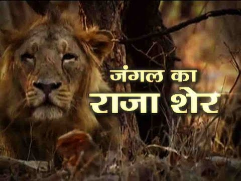 Jungle: Episode 1: The powerful and dangerous 'King Lion'