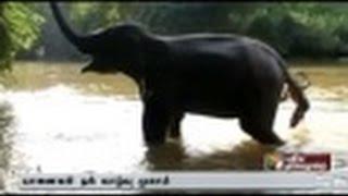 Rejuvenation camp for elephants concluded