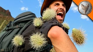 Download Youtube: EXTREME Cactus Attack!