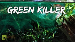 Video My Pets Were Killed by a Green Monster MP3, 3GP, MP4, WEBM, AVI, FLV Januari 2019