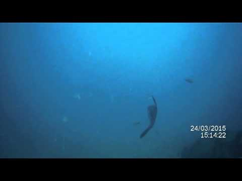 Mola mola in Spain