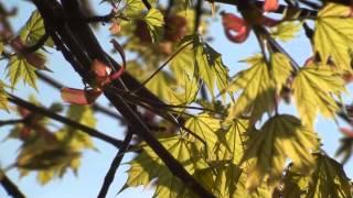Video Hudba z čokolády zrozená / Rytmy Země