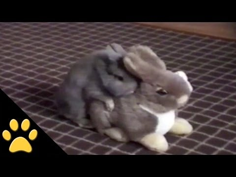 ANIMAL PLANET: Doin' It Like Bunnies!