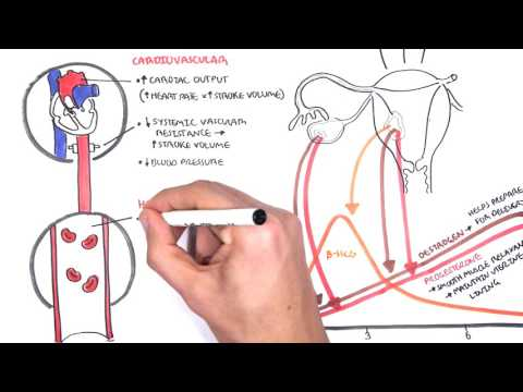Physiological Changes During Pregnancy