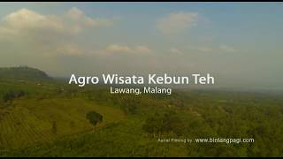 Tea Plantation, Malang
