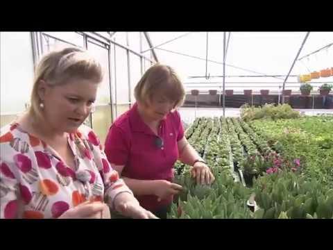 Zu Besuch in einer Familiengärtnerei | MDR Garten