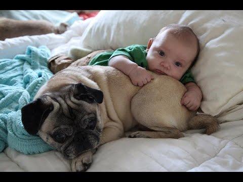 amore puro tra i carlino e bimbi