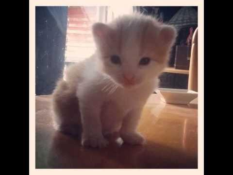 Selfie. The 44 Best Cats Twitter Feeds To Follow