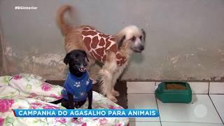 Centro de Zoonoses de Bauru arrecada roupas e cobertos para os animais