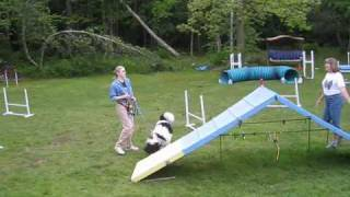 Standard Poodle Agility Training
