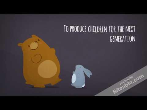 Genetic algorithms in a nutshell