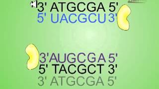 Antisense RNA technology