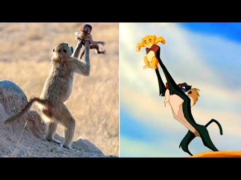 Monkey Holds Infant Just Like in Iconic 'Lion King' Scene