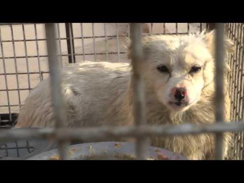 Pelliccia di cane - Un'investigazione di Animal Equality - Cina - 2015
