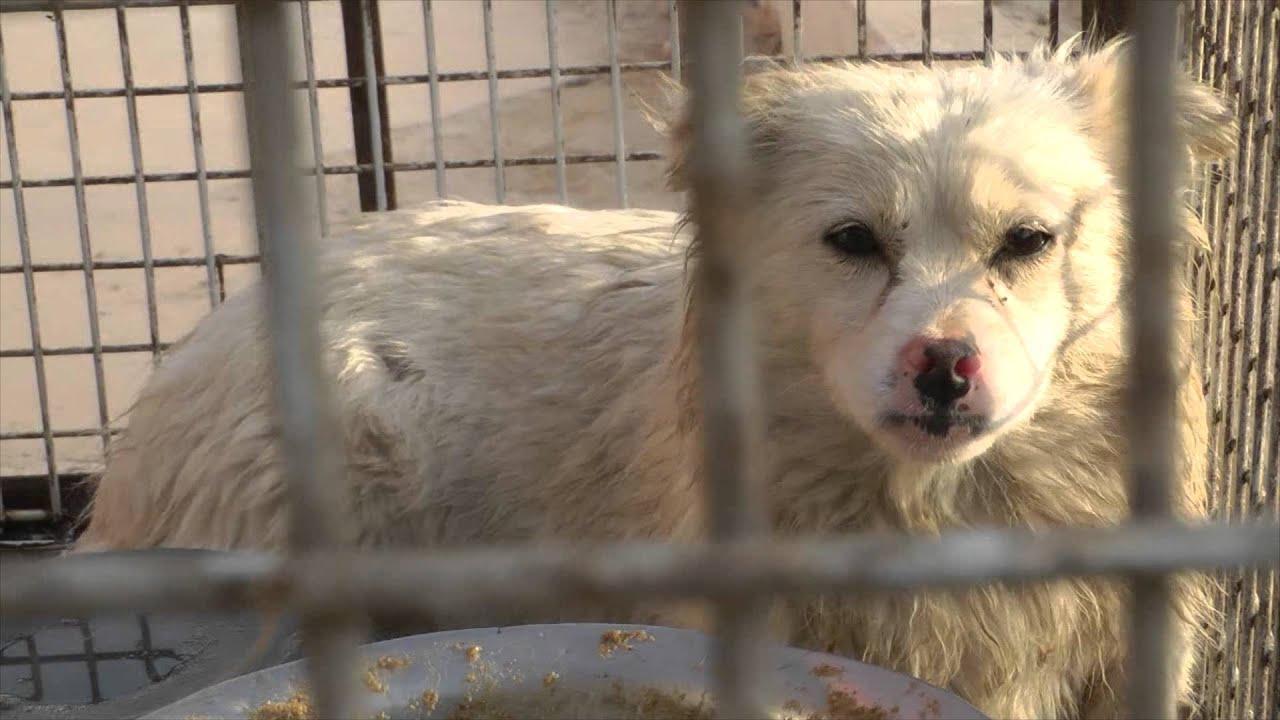 Pellicce di cani e gatti in Cina, borse e giocattoli per bambini… Fermiamo questo orrore!