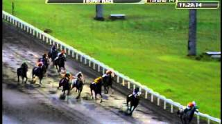 RACE 5 STAND IN AWE 11/29/2014