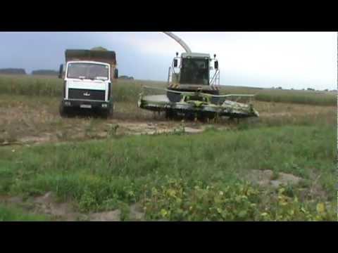 уборка кукурузы на силос в Беларуси
