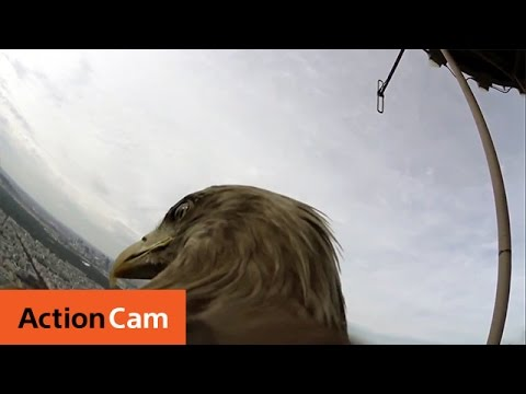 POV - Victor, a white tailed eagle, takes the Action Cam Mini on a flight from the summit of the Eiffel Tower to see how Paris looks like from the back of an eagle. Watch Victor glide over the Trocadero,...