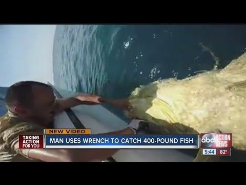 Man Uses a Wrench to Catch a 400 Pound Goliath Grouper