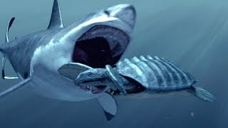 SharkWeek  Starts Sun Jul 23 Proof that even sharks have a bad day. Stream Full Episodes Now on Discovery GO: https://www.discoverygo.com/shark-week/ ...