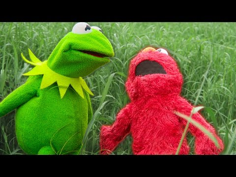 Kermit the Frog and Elmo