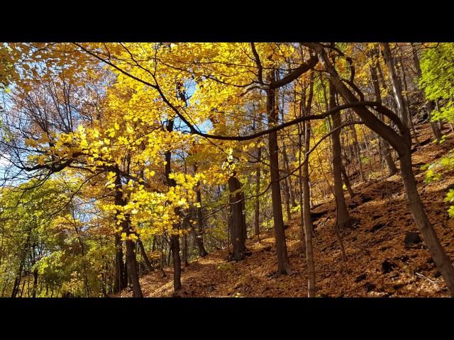 Le-parc-mont-royal-à-l-automne