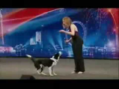Britain's Got Talent  – Gin the clever funny dog… Sooo funny!!!