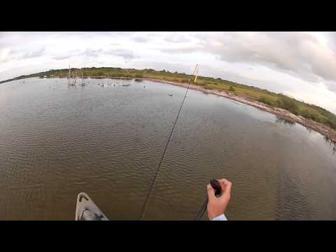 Pig In The Water! - kayak fishing, kayak photos, kayak videos