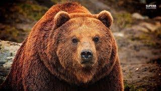 The Best Documentary Ever - NEW Hybrid Bears Amazing New Evidence Full Length Documentary HD - 2017