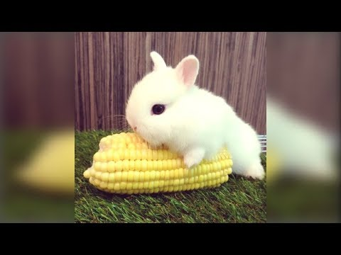 Funny cat videos - Cute Rabbit - Funny And Cute Bunny Videos Compilation Of Rabbits -- NEW