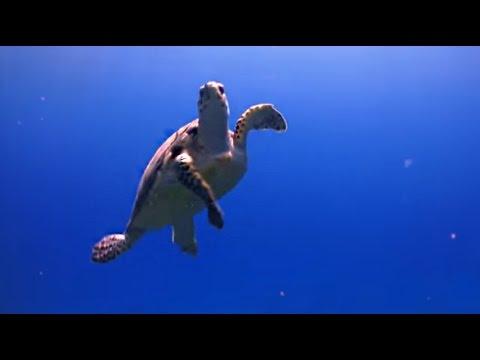 Une clinique pour les tortues