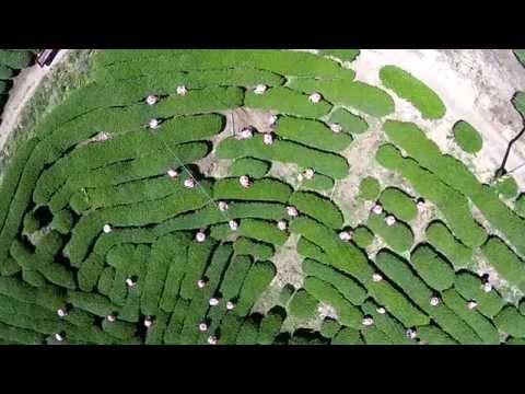 Nantou County Drone Video