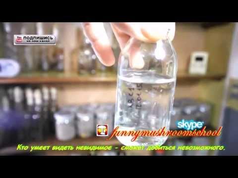 Как сделать жидкий мицелий