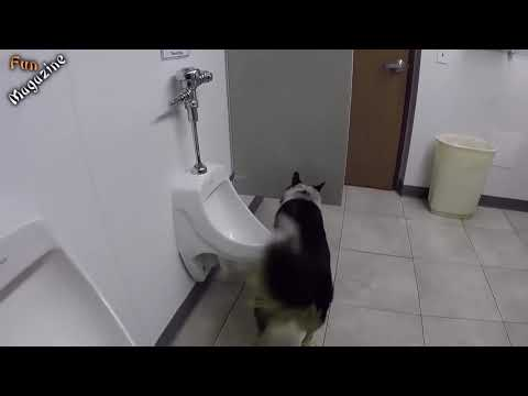 Funny Dogs Peeing,What a smart dog
