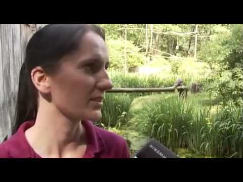 Schwerin: Zoogeschichten Schwerin - Affen & Vögel i ...