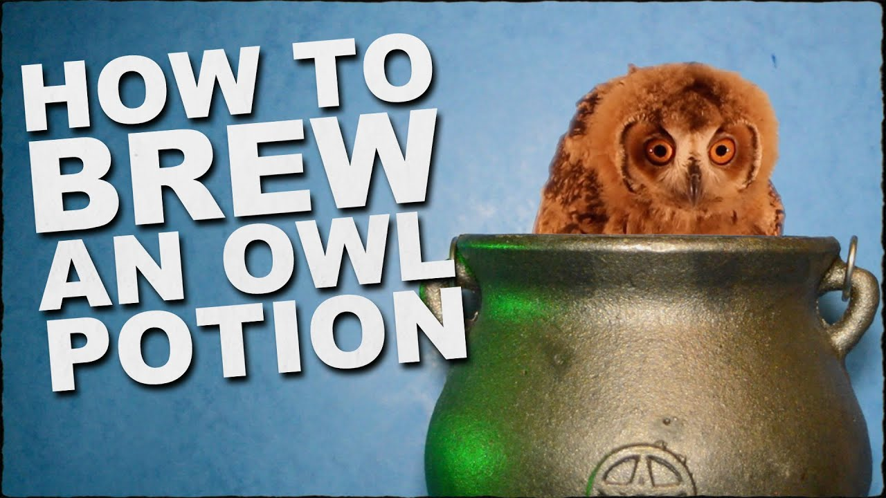 How To Brew A Magic Owl Potion