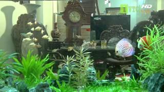 Video phong thủy, phong thủy bể cá - phan 2