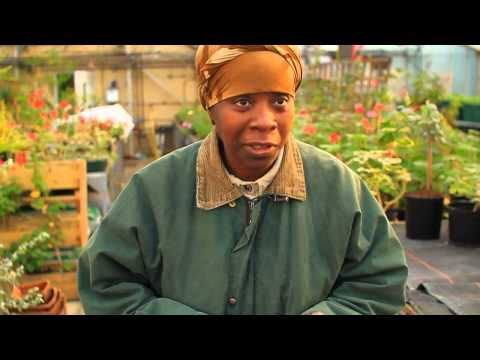 Jamaica Permaculture Course – March 2014
